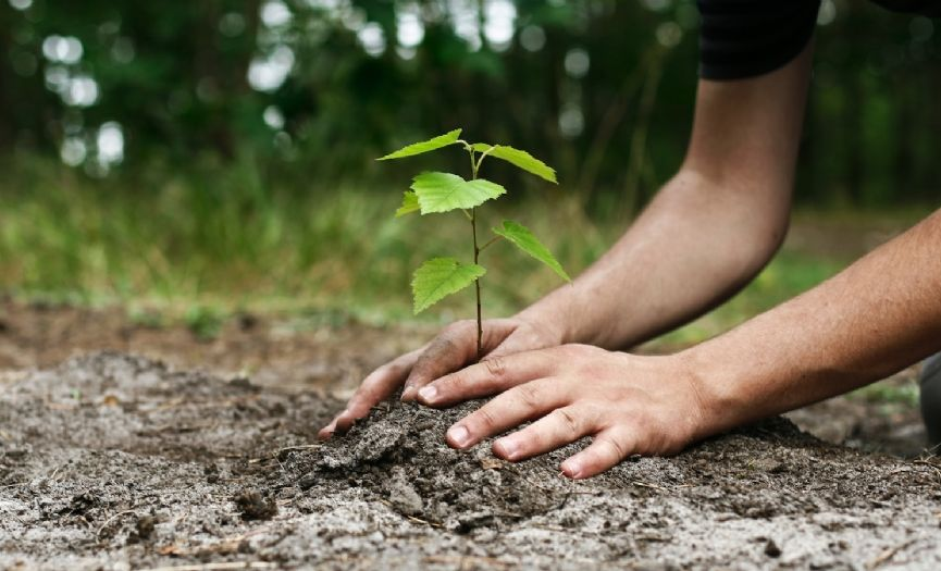 The Holiday of Respecting God and His Creations: Tu BiShvat